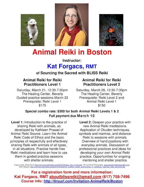Animal Reiki 3-15